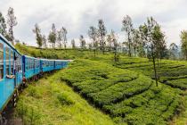 紅茶の国 スリランカ|LINK!