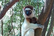 独自の生態系は驚きの連続 マダガスカル|旅行記